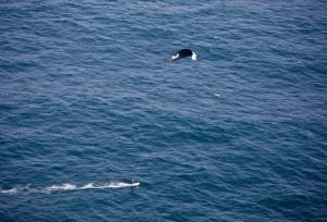 mini-kitesurf-odyssey-aerial2